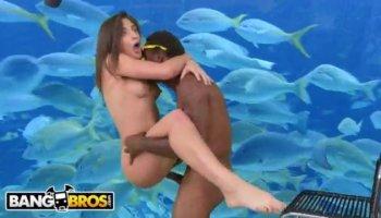 Roxy Raye interracial anal sex